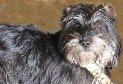 Троицкие зоозащитники нашли дом собаке из ветинститута. Жуля уехала жить заграницу