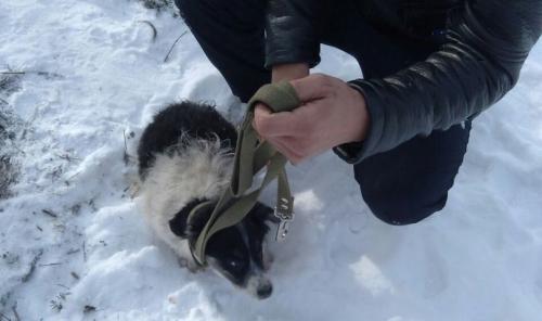 Троицкие зоозащитники спасли щенков из люка. А ведь в люк могут провалиться и люди