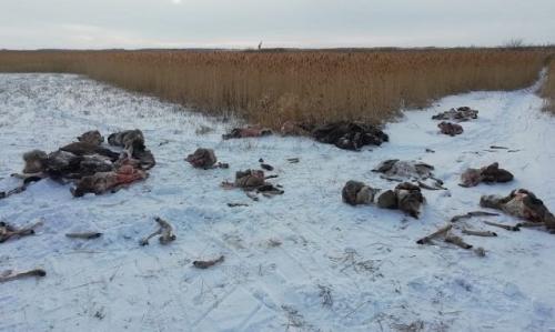 Следы расправы. Возле села Песчаного Троицкого района нашли останки более 30 животных